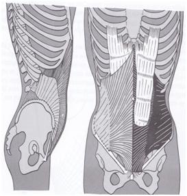 medial oblique abdominal