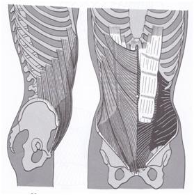 outside oblique abdominal