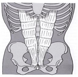 proper abdominal